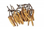 Traditional Chinese Medicine - Cordyceps Sinensis