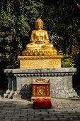 Buddha Alter