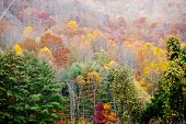 fall leaves on the mountainside