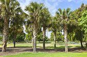 Palm Trees Balboa Park California.