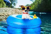 Perro de playa