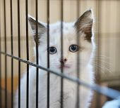 pic of forlorn  - a tiny kitten in an animal shelter - JPG