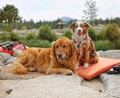 picture of heeler  - a pair of dogs enjoying the outdoors on a beautiful summer day - JPG