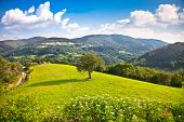 foto of grassland  - Tree on the midle of meadow  - JPG