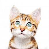 Cute kitten looking up.