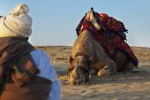 Camel JAISALMER INDIA