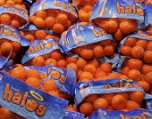 Bags Of Halo Mandarins Fruit.
