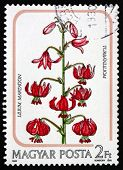 Postage Stamp Hungary 1985 Martagon Lily, Plant