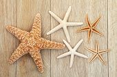 picture of echinoderms  - Starfish sea shell abstract over old oak background - JPG