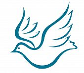 Flying dove of peace