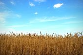 Grove of Reeds