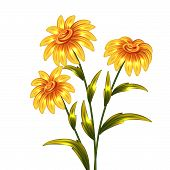 Vector yellow flowers