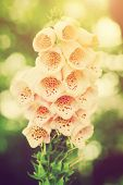 Beautiful flower in sunlight. Vintage style. Nature, gardening