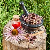 Black Mortar With Dried Coneflowers And Vial With Essential Oil In Garden