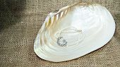 foto of collier  - Star and crescent pearl bracelet inside sea shell - JPG