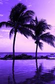 vacation, beach, summer and leisure concept - coconut tree silhouette on the beach, purple sunset vi