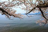 stock photo of cho-cho  - Shiga Prefecture Japan  - JPG