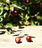 Apples on wooden table in garden, outdoors