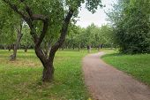 Footpath In The Apple Orchard