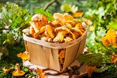 pic of edible mushroom  - Fresh mushrooms in basket - JPG