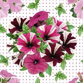 stock photo of petunia  - seamless pattern of multicolored petunias on white background - JPG