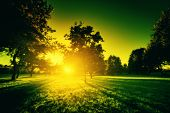 Landscape, nature in green tone. Sun shining through trees. Environment, conceptual