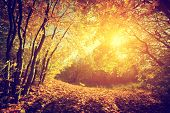 Autumn, fall landscape. Sun shining through red leaves. Vintage photograph style