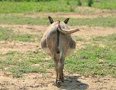 Donkey's butt