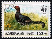 Postage Stamp Azerbaijan 1994 Caucasian Grouse, Bird