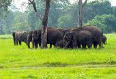 Elephants on the island of Sri Lanka