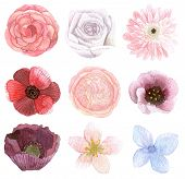 Set Of Many Flowers