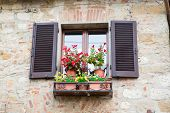 idyllic window with flowers