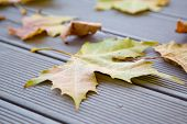 Autumn leaves on the wooden bench