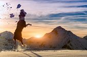 picture of bitch  - Border collie jumps in the snow during the sunset - JPG