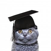 Smart Cat in the graduate cap isolated on a white background