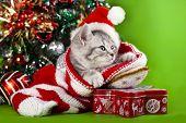 kitten christmas