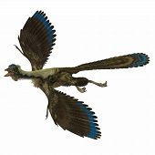 Archaeopteryx Over White