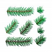 illustration of eight spruce twigs