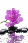 beautiful branch pink orchid with stones reflection