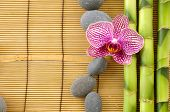 Beautiful orchid with gray stones and bamboo grove on mat