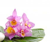 pink orchid and wet banana leaf