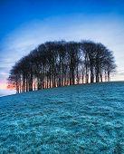 Frosty Winter Sunrise