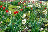 Spring Flowerbed (closeup)
