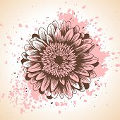 Hand drawn floral background with pink paint splash and gerbera flower.