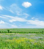 sunny day on green landscape with flowers and blue sky with clouds