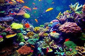 pic of aquatic animals  - Coral Reef and Tropical Fish in Sunlight - JPG