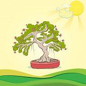 foto of bonsai tree  - bonsai tree - JPG