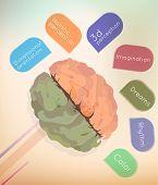 picture of hemisphere  - The brain - JPG