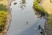 picture of fish pond  - orange carp fish in the shallow pond in the garden - JPG