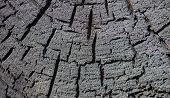 stock photo of cross-section  - Cross section of the burnt tree trunk - JPG
